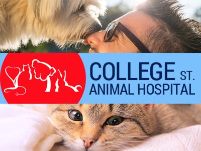 College Street Animal Hospital